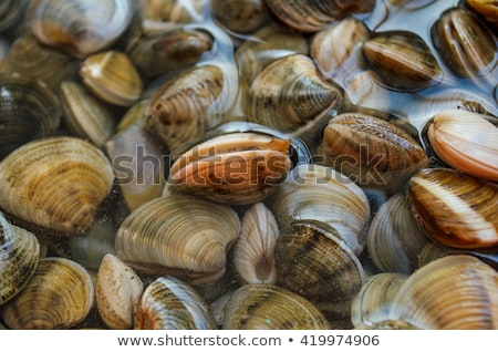 Fresh mediterranean clams Stock photo © mikdam