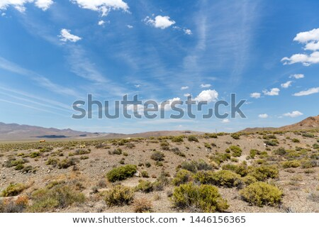 sagebrush field Stock photo © PixelsAway
