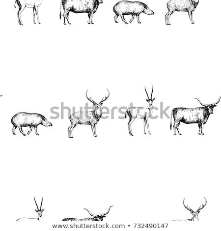 large fallow deer bull Stock photo © taviphoto