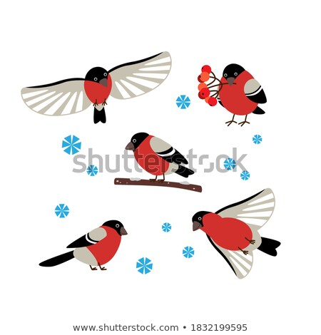 Merry Christmas Bullfinch Set Sitting on Branch Stock photo © robuart