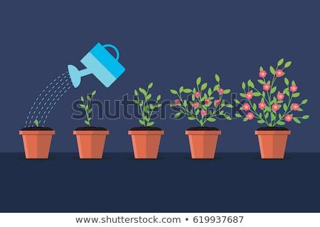 Kwiat rozwój puli gleby odizolowany ikona Zdjęcia stock © robuart