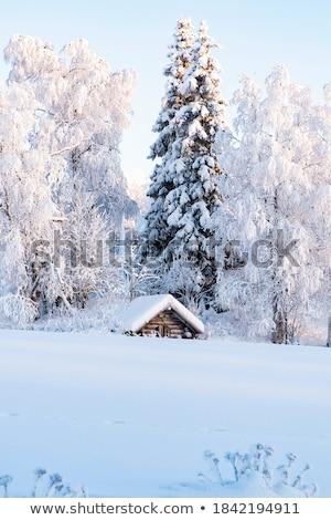 snowy logs Stock photo © phbcz