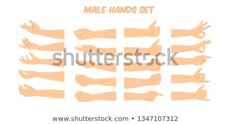 Mannelijke hand vuist geïsoleerd witte man Stockfoto © Len44ik