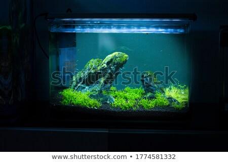 Green tank Stock photo © Givaga