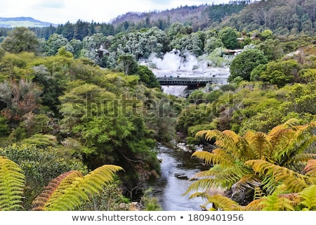 Whakarewarewa thermal geyser area Stock photo © backyardproductions