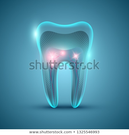 Healthy tooth, gums and bone Stock photo © Tefi