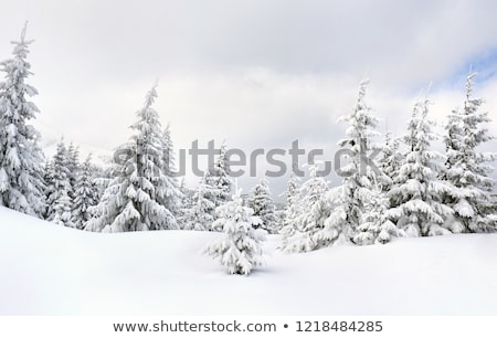 Snow covered tree branches Stock photo © Taigi
