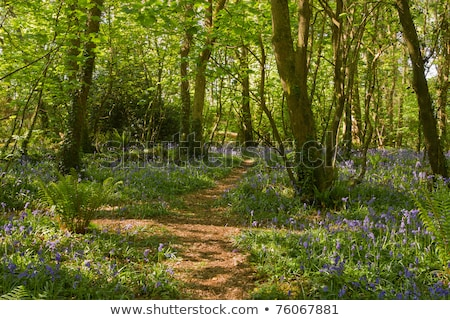 Chemin bois parc cornwall printemps forêt Photo stock © latent