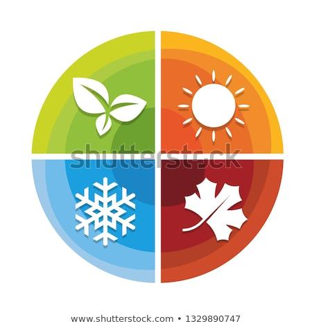 Four seasons daire bo ağaç bahar doğa Stok fotoğraf © milsiart
