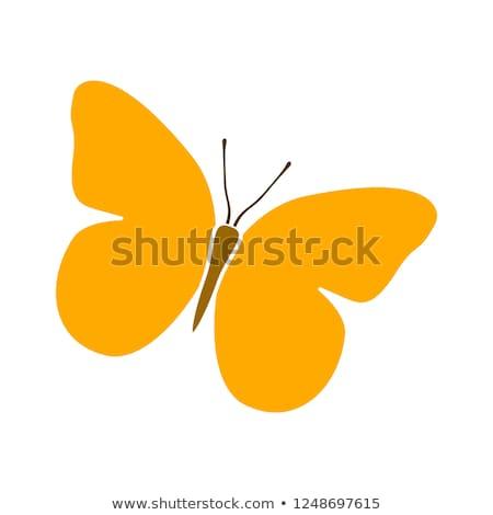 Foto stock: Borboleta · ícone · vetor · colorido · logotipo · design · de · logotipo