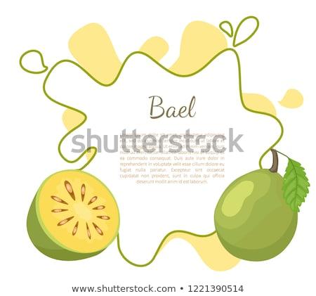 Egzotikus lédús gyümölcs vektor poszter szöveg Stock fotó © robuart