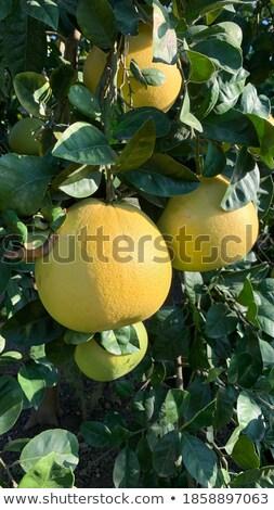Ilustração mãos comida feliz olhos fruto Foto stock © colematt