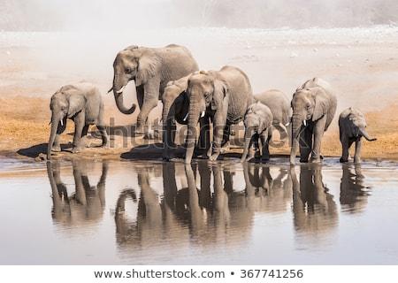 Afrika · filler · içme · çamurlu · diğer · hayvanlar - stok fotoğraf © artush