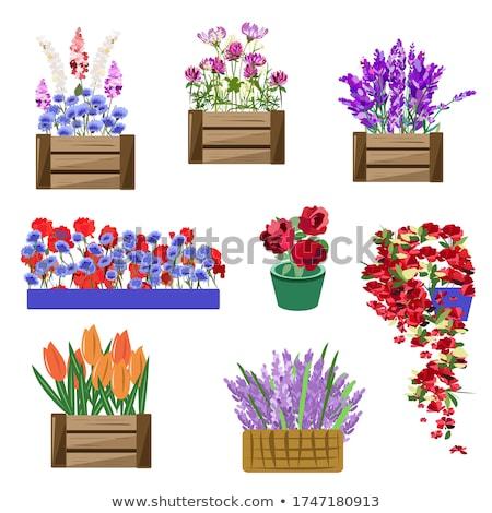 Virág növekvő edény doboz növényvilág dekoráció Stock fotó © robuart