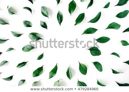 Brilhante verde luz colorido folhas verdes Foto stock © vkstudio