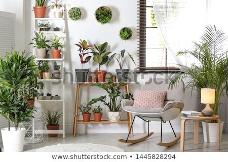Polc bútor könyvek növény dekoráció fából készült Stock fotó © robuart