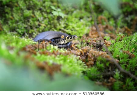 little snake in green nature  Stock photo © sweetcrisis
