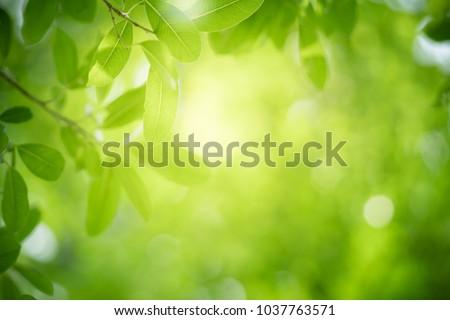 fresh green spring leaf Stock photo © prill