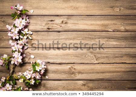 tavasz · ág · rózsaszín · virágok · virágzó · zöld · levelek - stock fotó © tarikvision