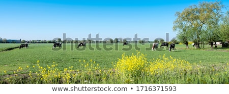 cow with trees Stock photo © w20er