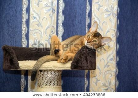 Kitten klimmen Rood pijler kat tuin Stockfoto © nuiiko
