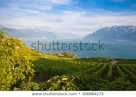 Vineyards of the Chexbres region over lake of Geneva Stock photo © CaptureLight