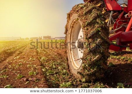 Tracteur coucher du soleil illustration champs industrie agriculture Photo stock © adrenalina