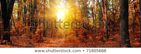 autumn birch and larch trees Stock photo © Mikko