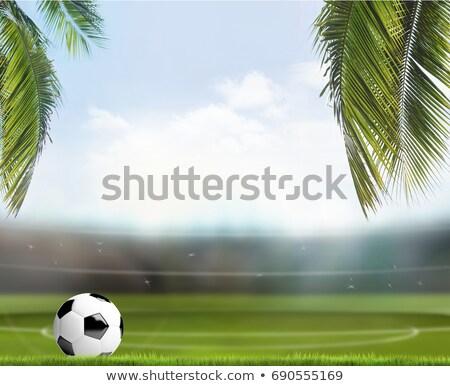 Futball futball labda trópusi pálmalevelek stadion Stock fotó © Wetzkaz