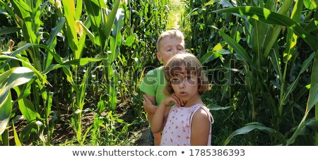 Young girl walking path in cornfield Stock photo © IS2