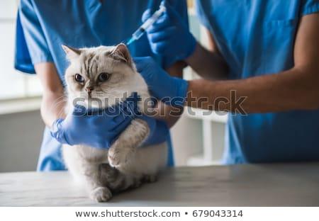 Twee kat onderzoek tabel vrouw kantoor Stockfoto © wavebreak_media