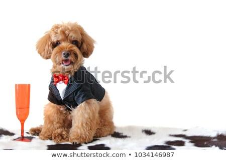 Hond smoking illustratie ontwerp achtergrond Stockfoto © bluering