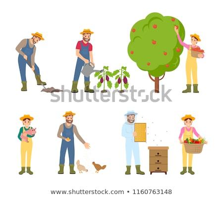beekeeper and farming man vector illustration stock photo © robuart