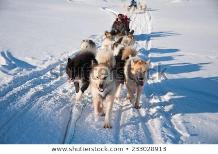 Tapasztalat Alaszka magas döntés grafikus hó Stock fotó © kbuntu
