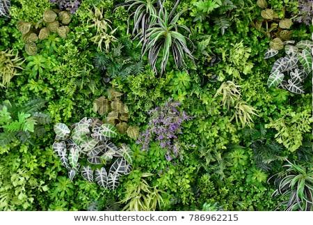 geheime · tuin · poort · bomen · park · bos - stockfoto © jsnover