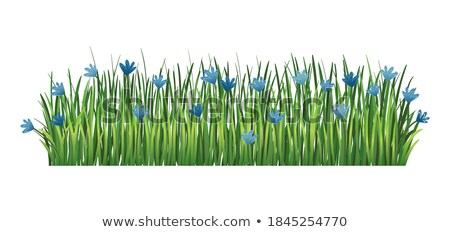 Green grass border. Fresh green cornflower and branches grass. Isolated on transparent background. V Stock photo © designer_things