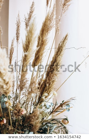 Woman with a bunch of dried flowers Stock photo © photography33