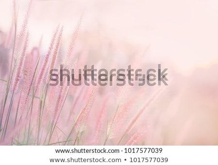 pastel flower closeup Stock photo © prill