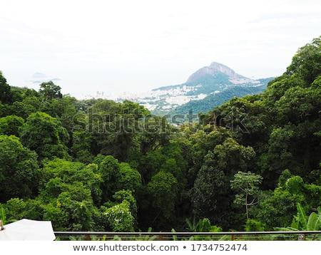 jesus · cristo · Rio · de · Janeiro · turistas · feliz · ver - foto stock © spectral
