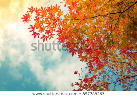 light filtered by autumn leaves Stock photo © taviphoto