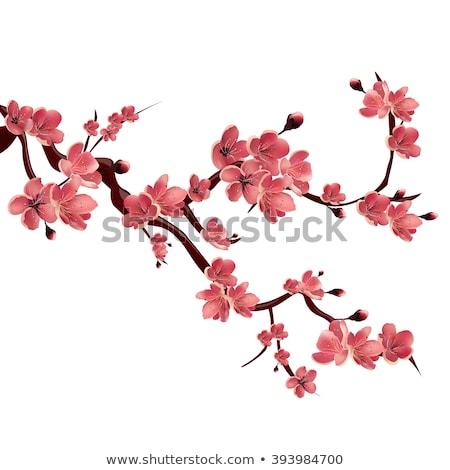 Fa virág terv szeretet absztrakt levél Stock fotó © creative_stock
