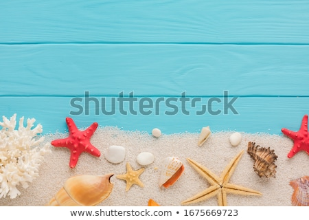 background of sand with shell Stock photo © koca777