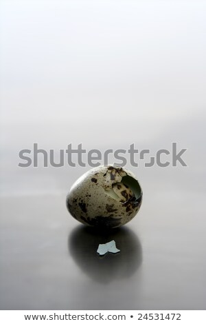 Broken quail egg, new baby bird will born Stock photo © lunamarina