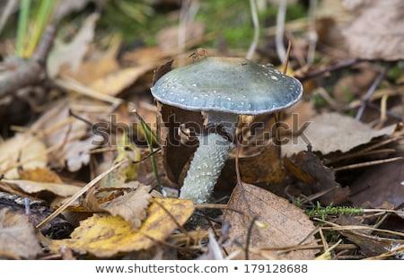 菌 自然 オランダ 森林 夏 緑 ストックフォト © compuinfoto