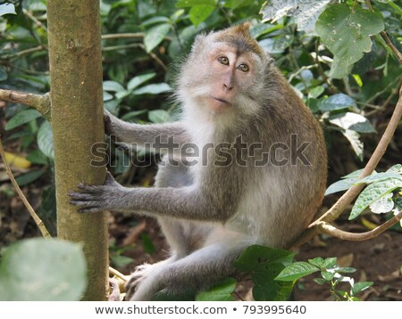 Stock photo: Monkey Holding a Leaf