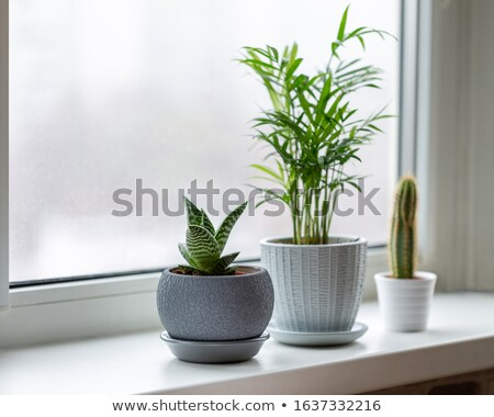 A chamaedorea plant Stock photo © bluering