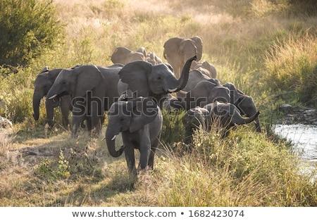 африканских закат парка ЮАР природы фон Сток-фото © simoneeman