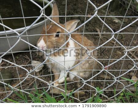 Coniglio bianco mangiare qualcosa bellezza studio Foto d'archivio © vauvau