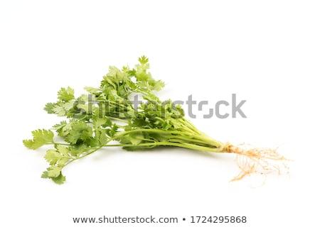 Stok fotoğraf: Yeşil · kişniş · yaprakları · yalıtılmış · beyaz