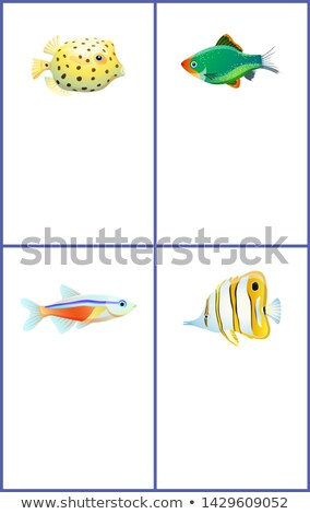 Green Tiger Barb and Neon Tetra Fishes Posters Stock photo © robuart
